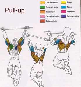 1pullup2
